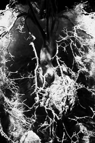 vascular_system2