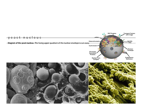 yeast_Page_03