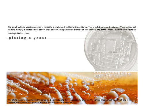 yeast_Page_08